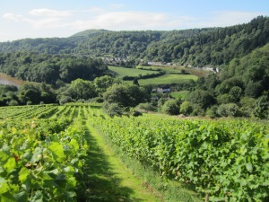 Parva Farm Vineyard, Monmouthshire