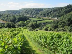 Parva Farm Vineyard, Monmouthshire